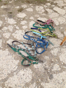 Horse halters, used, top name brands and  other tack for sale