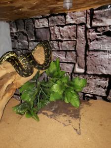 Snake and habitat