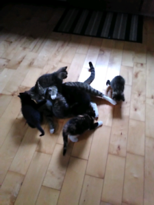 7 kittens free to good homes