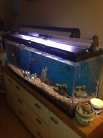 African Cichlids plus 55 Gal - 300$ recent tank upgrades
