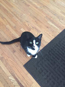 Looking to re home my loving three legged cat