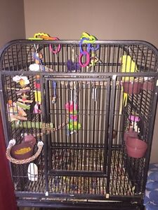 Indian ring neck all supplies needs new home asap