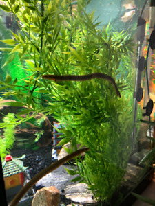 two Rope Reed fish