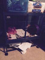 hedgehog in ferret cage