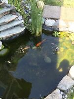 2 Koi and Friends