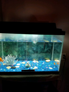 3 fish and tank for sale