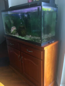 Fish tank + 3 Fishes  NEED GONE ASAP $300 OBO