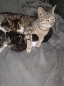 Kittens 9wks old