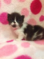 BEAUTIFUL PERSIAN FEMALE AVAILABLE FOR RESERVATION