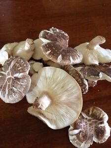 Mushroom Growing Workshop