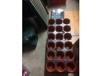Seedling trays & propogator