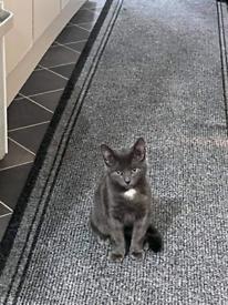 Kitten boy