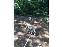 Dog Walking Fully Insured Dog Care