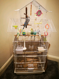 7 Budgies, with cage.