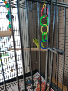 Female green  parrotlett with cage