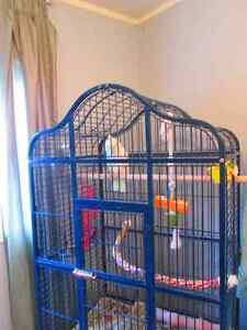 Very large parrot cage for sale or trade for smaller cage Prince George British Columbia image 1