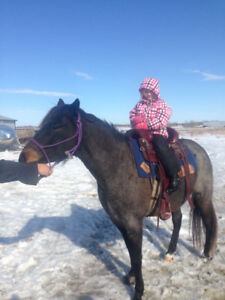 Horse For Sale Blue Roan