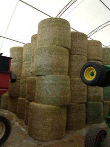 Hay     4 x 5 Round bales for sale