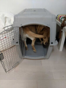 Dog Kennel - Large - Airplane Certified - Used Only Once