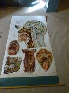 7 - 1918 frohse A J Nystrom anatomical charts Oakville / Halton Region Toronto (GTA) image 2