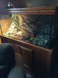 Aquarium With Custom Built Oak Stand & Lid