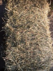 Cow quality hay available-2017 1st Cut Timothy & Timothy/Alfalfa