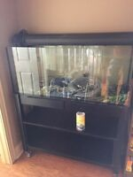 60 Gallon (230L) aquarium and stand