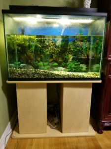 Fish tank with lights, accessories