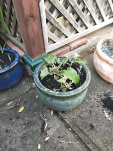 Succulent pot Warradale Marion Area Preview