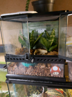 Tree frog with or without tank
