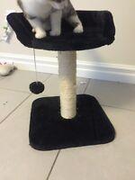 Cat Scratcher with Perch