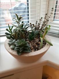 Succulent house plants