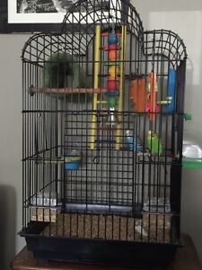 Bird cage and Two Budgies