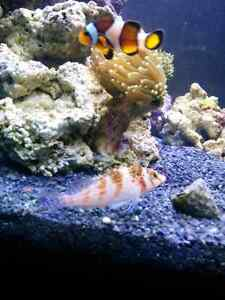 Saltwater fish and rock