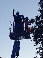 tree removal,yard clean up,renovations,construction clean up