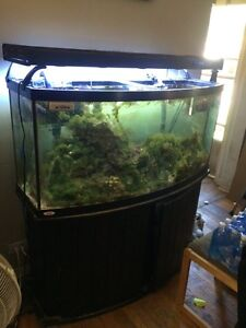72gallon bow front saltwater fish tank
