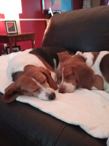 EXPERIENCED  IN-YOUR HOME/PET SITTER-24/7 St. John's Newfoundland image 7