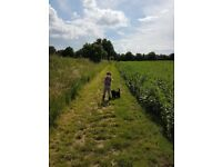 Dog boarding in and around stowmarket