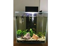 Fluval Edge Aquarium 46L in Gloss Black