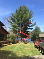 Tree Removal..Always Safe! Fast & Cheaper More Often Than Not!!!