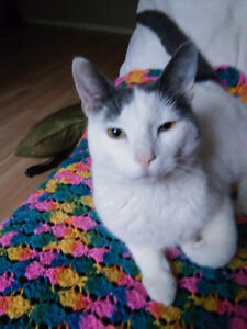 Adorable 1 year old cat needs a loving home