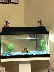 10 gallon fish tanks for sale - $20 (Vancouver South)