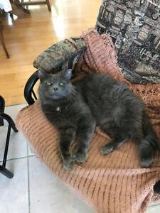 Merlin le chat pour tenir compagnie