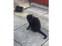 Cat free to good home