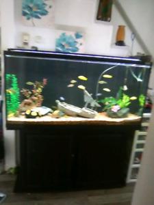 Aquarium 80 gallons