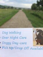 Experienced dog walker/ sitter