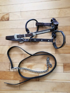 Leather show halter with lead.
