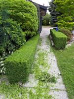 Professional Hedge Trimming Services, Gardening