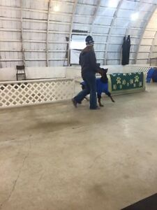 Dog Training - START Obedience Program London Ontario image 7