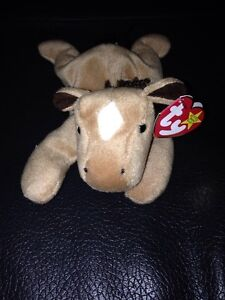 Derby Ty beanie baby still has tags price firm